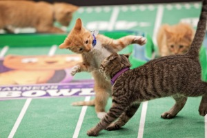 Kitty Bowl 2014