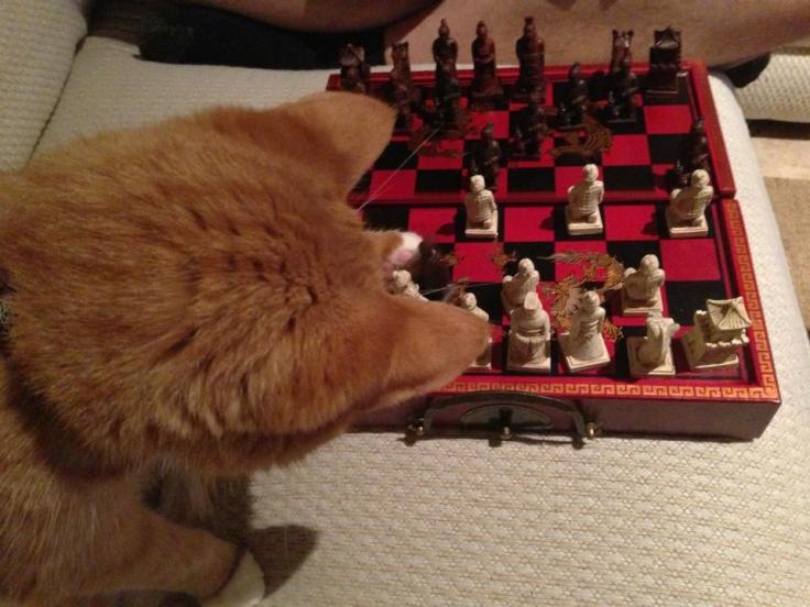 Calvin Chess