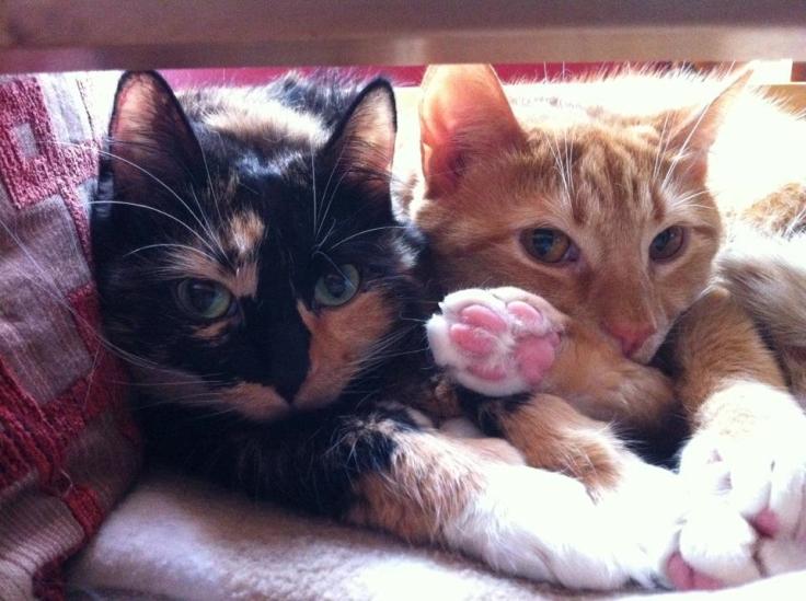 Calvin & Clementine Baltimore 2012